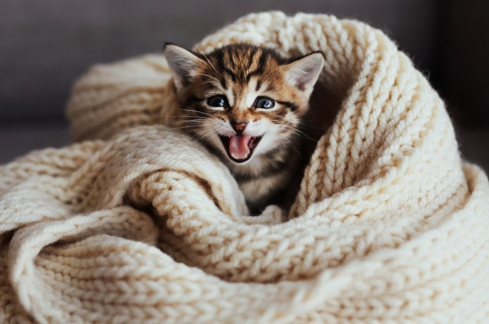 healthtipsarticles cat photo
